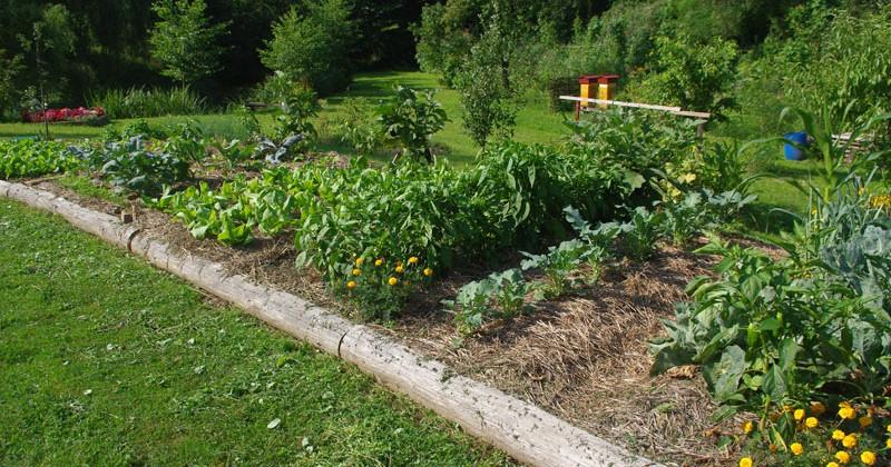 Органска пољопривреда
